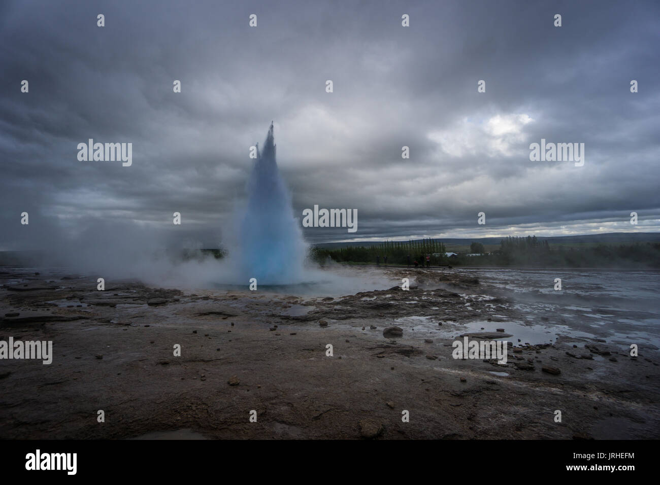 Iceland - Turquoise hot boiling water, summit of eruption of geyser strokkur with trees - Stock Image