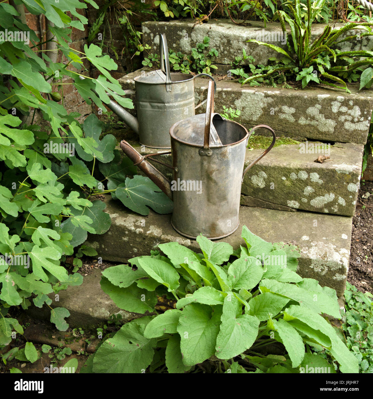 Two old galvanised steel metal garden watering cans on stone steps with green plant foliage, UK - Stock Image