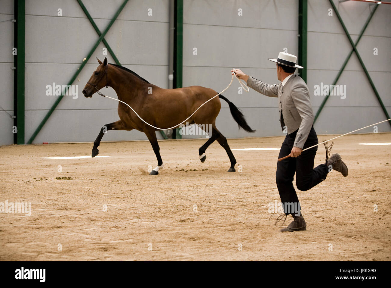 Equestrian test of morphology to pure Spanish horses, Spain - Stock Image