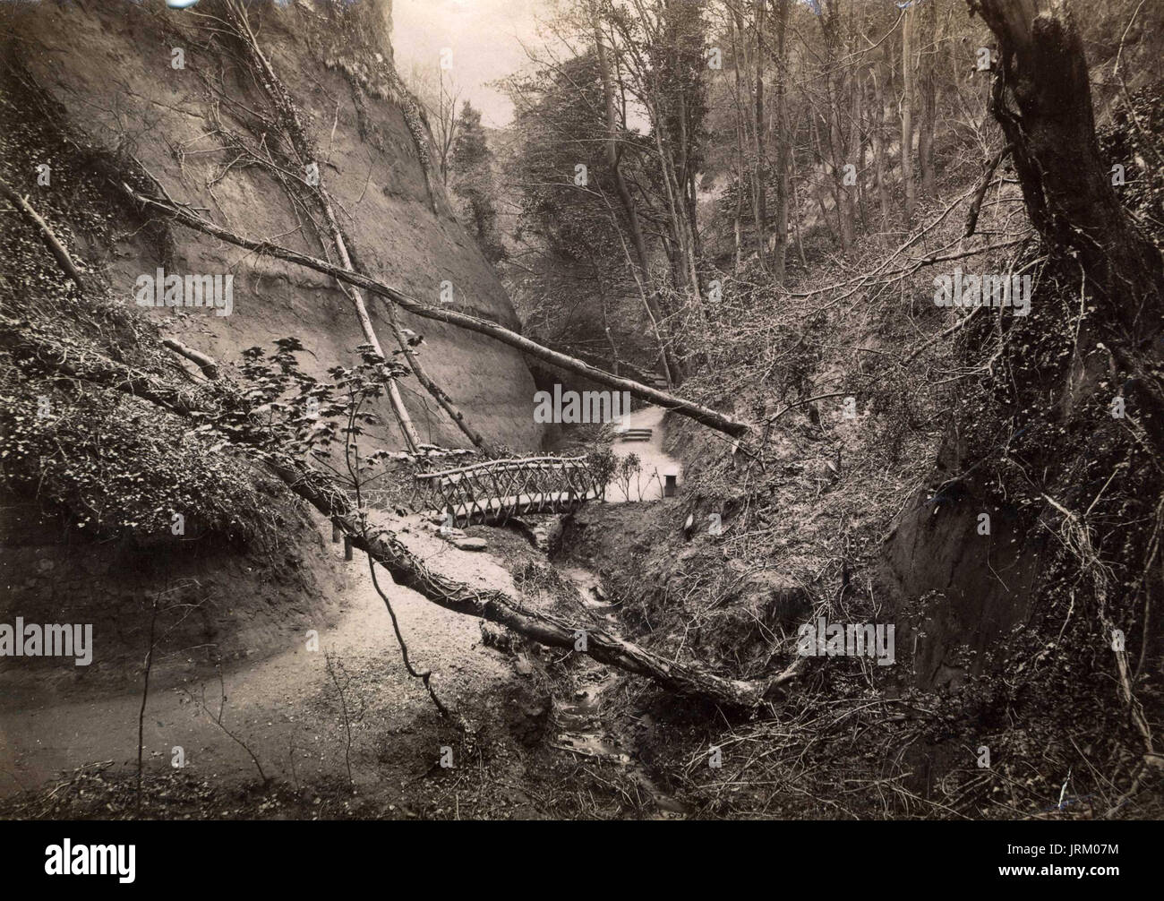 An 1890's Victorian Albumen topographical photograph of Shankin in the Isle of Wight - Stock Image