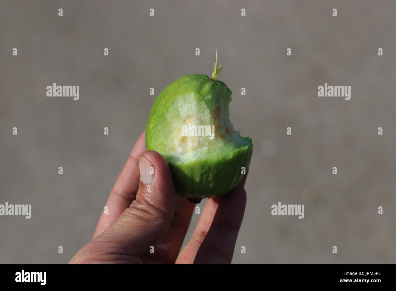 Close up of half eaten Psidium guajava Stock Photo