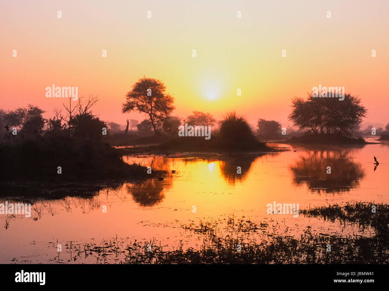 wetland reserve at sunrise, Keoladeo Ghana National Park, Bharatpur, Rajasthan, India - Stock Image