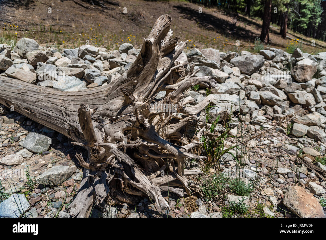 Driftwood on the banks of the Pend Oreille River. - Stock Image