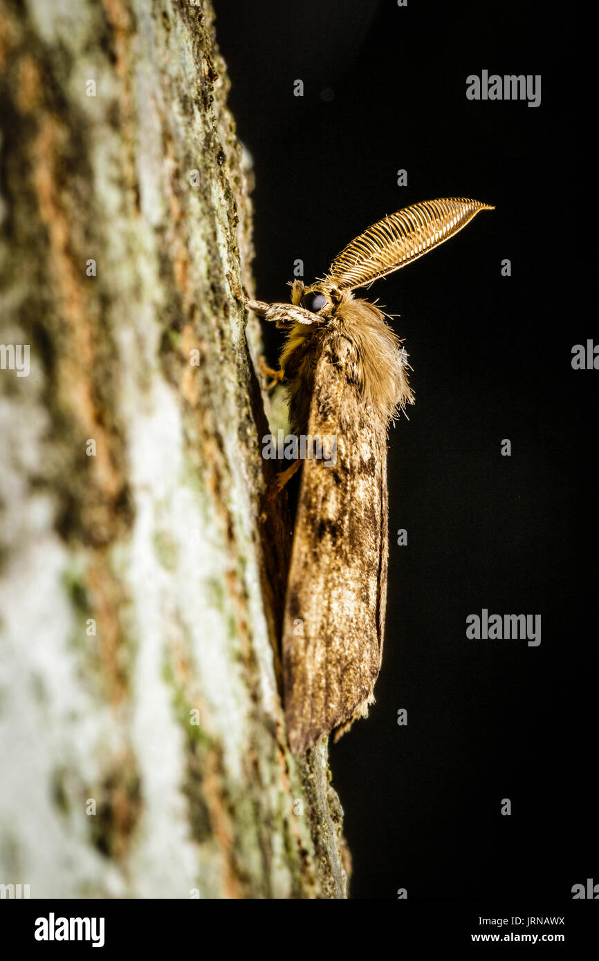 how to fly a gypsy moth
