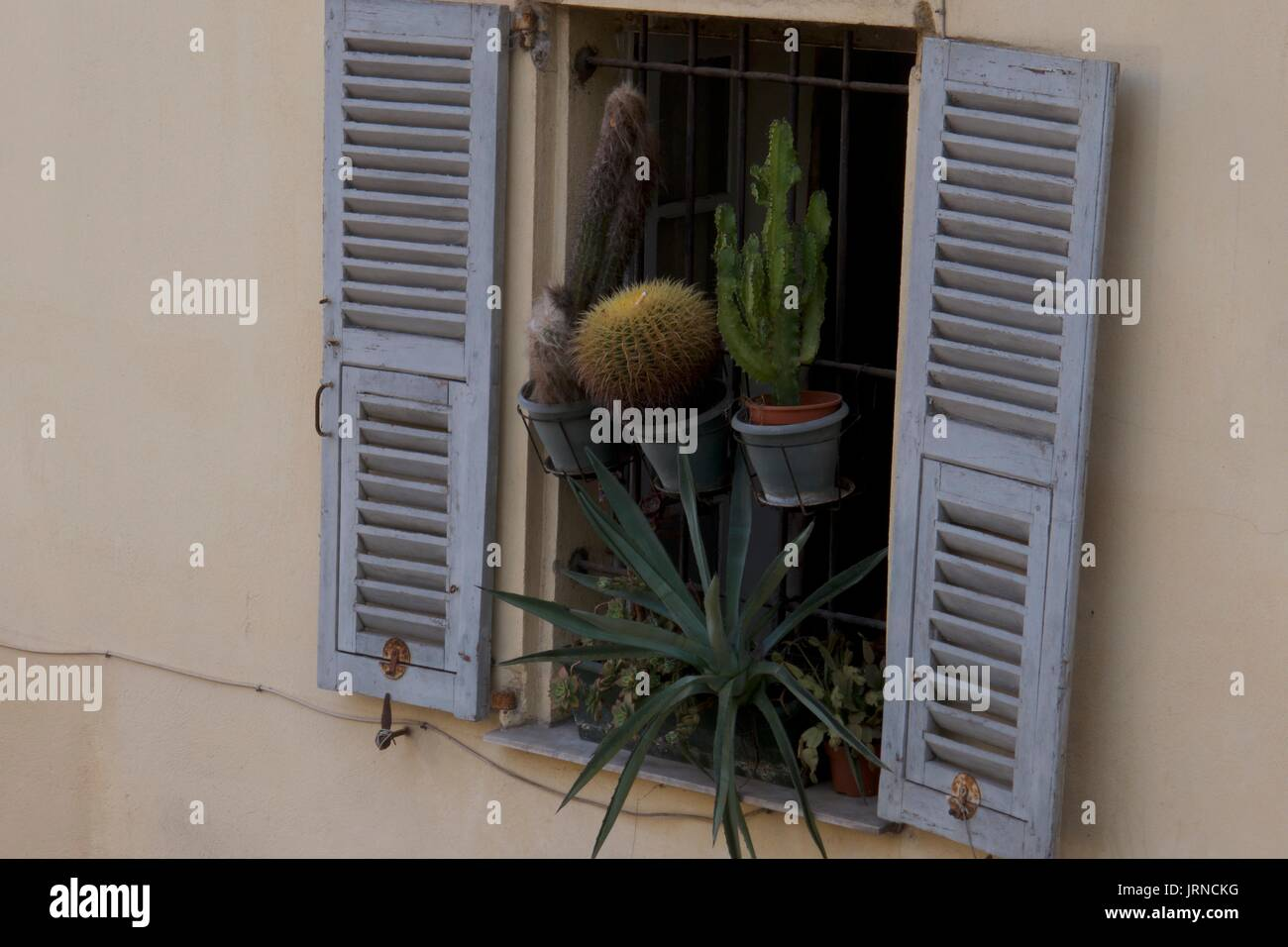 Display of cacti pot plants at traditional apartment window, Nice, France - Stock Image