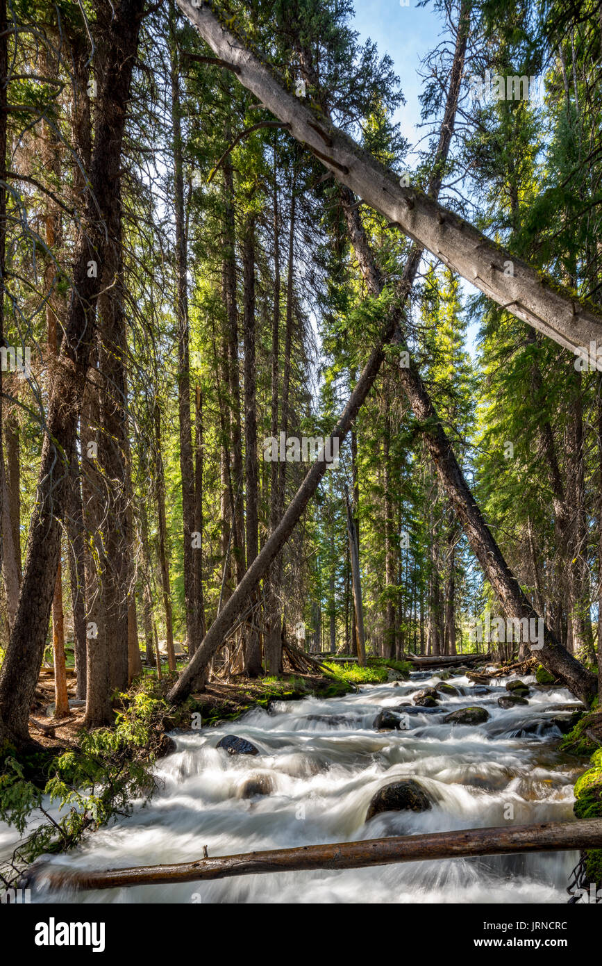 Trees lean over a creek in the Idaho wilderness - Stock Image