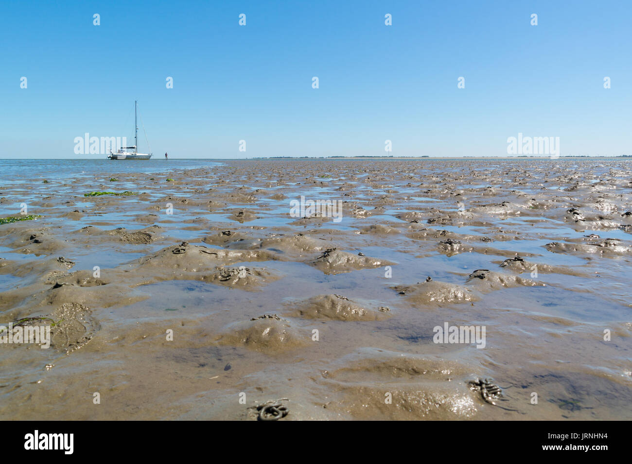 Panorama of mud flat with casts of lugworm and dried out sailboat at low tide on Waddensea, Netherlands - Stock Image