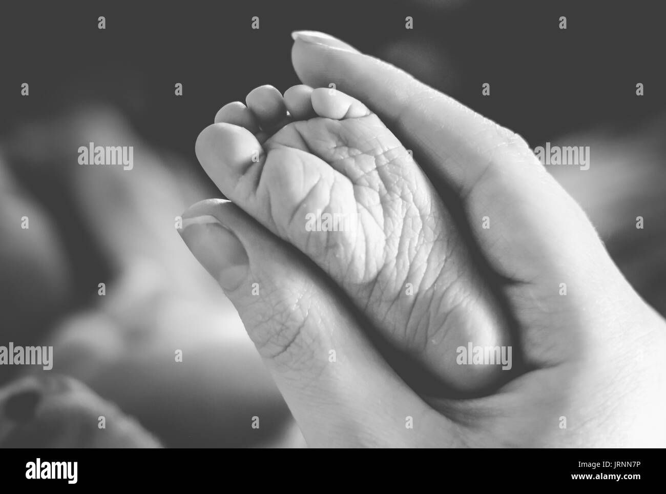 Adult woman holding baby's foot - Stock Image
