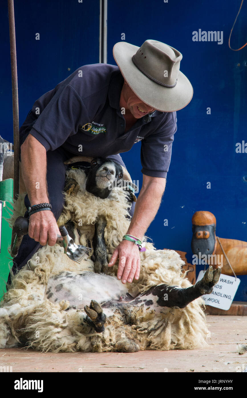 Woodstock, UK, 5th August 2017. Despite an early heavy  thunderstorm visitors flocked to BBC Countryfile Live, held within the grounds of Blenheim Palace. Animals, wildlife, food, outdoor sports, conservation, farming, rural affairs, entertainment, all were represented. Credit: Steve Bell/Alamy Live News - Stock Image
