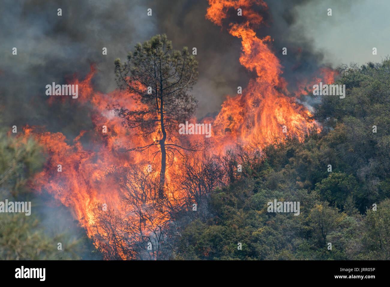 Detwiler Fire, California near Mariposa - Stock Image
