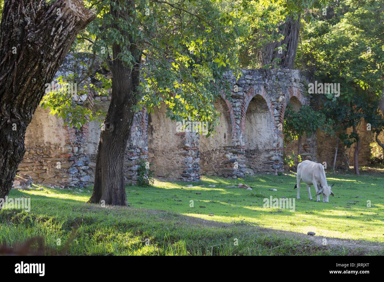 Estas ruinas de un viejo acueducto de una hacienda colonial en la que funcionaba un trapiche de caña de azúcar, ahora olvidado en el campo con ganado - Stock Image