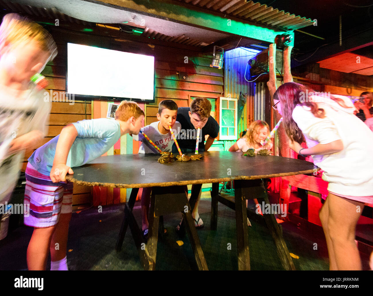 Cane Toad Racing evening at the Iron Bar restaurant, Macrossan Street, Port Douglas, Far North Queensland, FNQ, QLD, Australia - Stock Image
