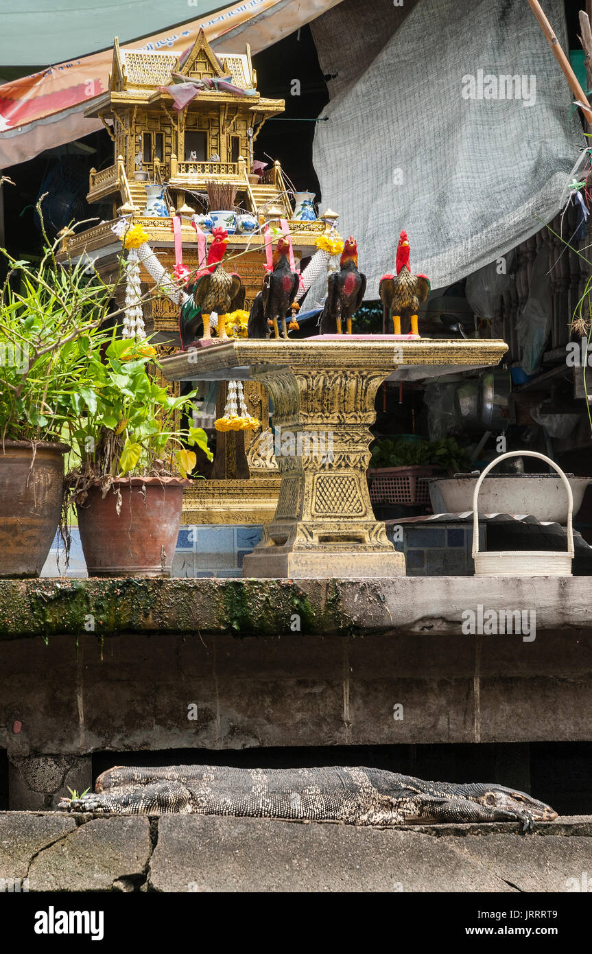 A water monitor resting on the steps next to a shrine at the entrance to a  waterside house on the Khlongs in Thonburi, - Stock Image