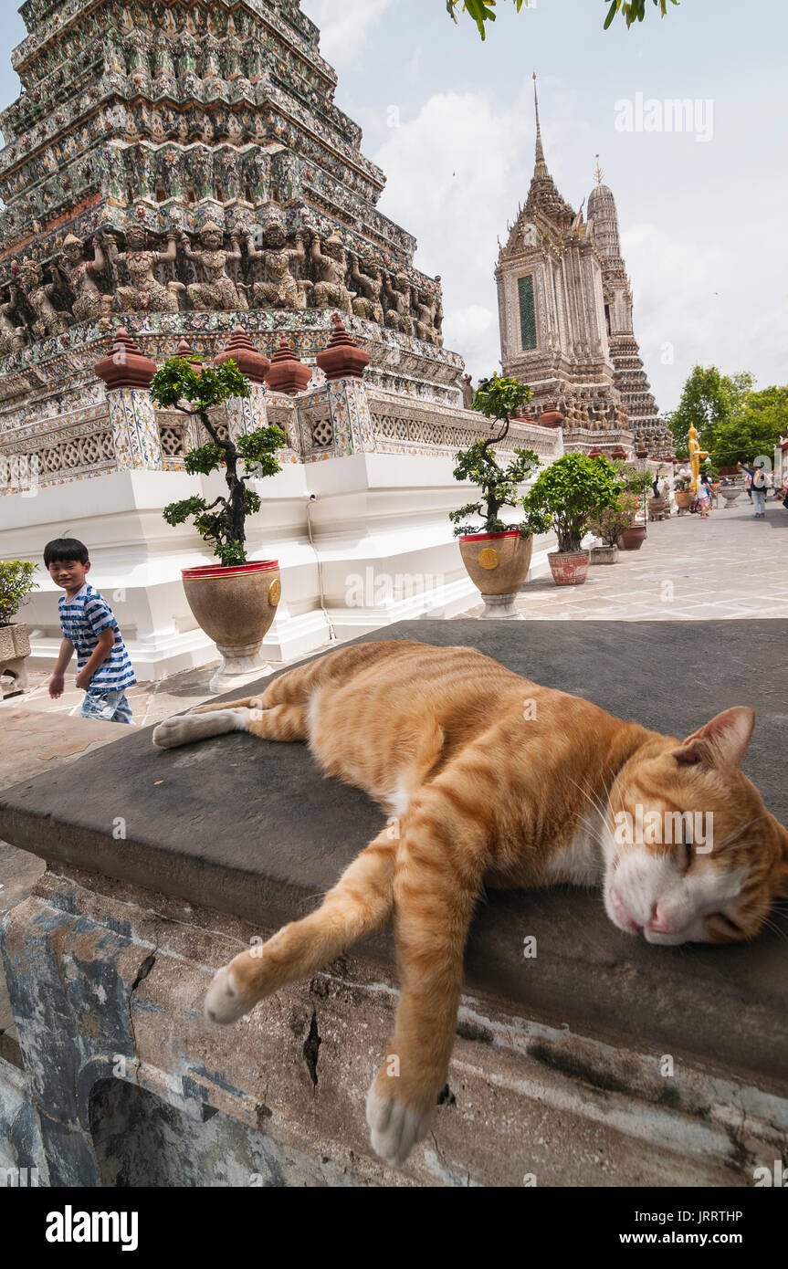 Cat resting  in the grounds of the Wat Arun temple, on the Chao Phraya River. Yai district, Bangkok, Thailand - Stock Image