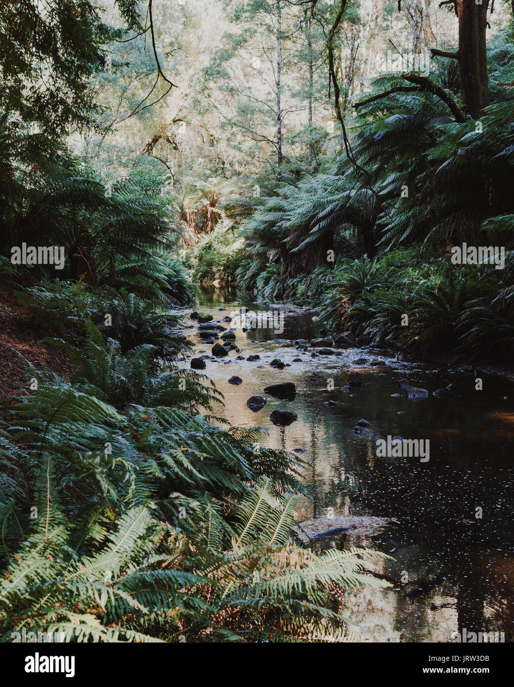 The beautiful river at Dandos Camping grounds in the Otways in the early morning with light lush ferns and trees. - Stock Image