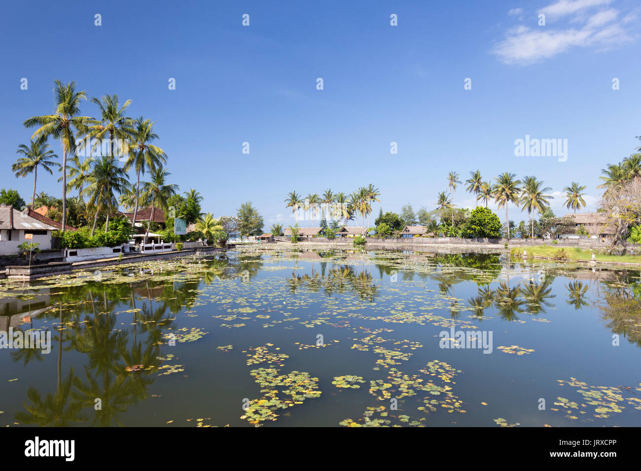 Lotus water lilies growing in the lagoon at Candidasa, Bali, Indonesia - Stock Image