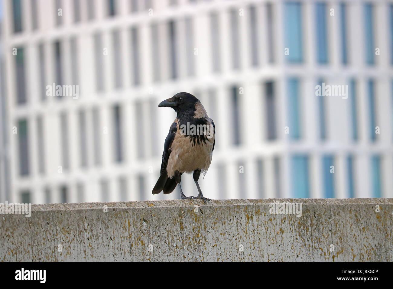 Bird Sitting On Wall Stock Photos & Bird Sitting On Wall Stock ...