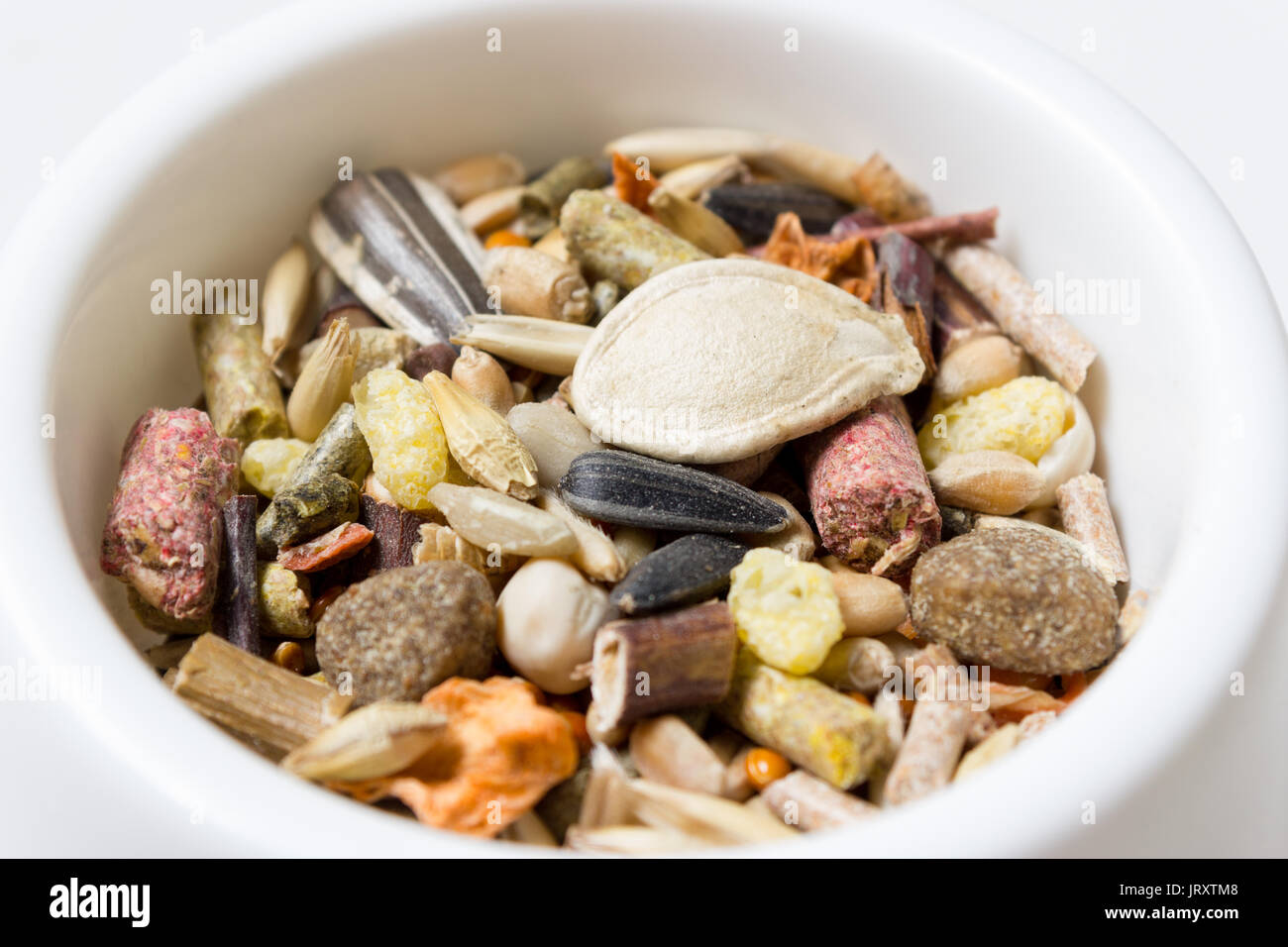 Feeder with grain and cereal feed for rodents - Stock Image