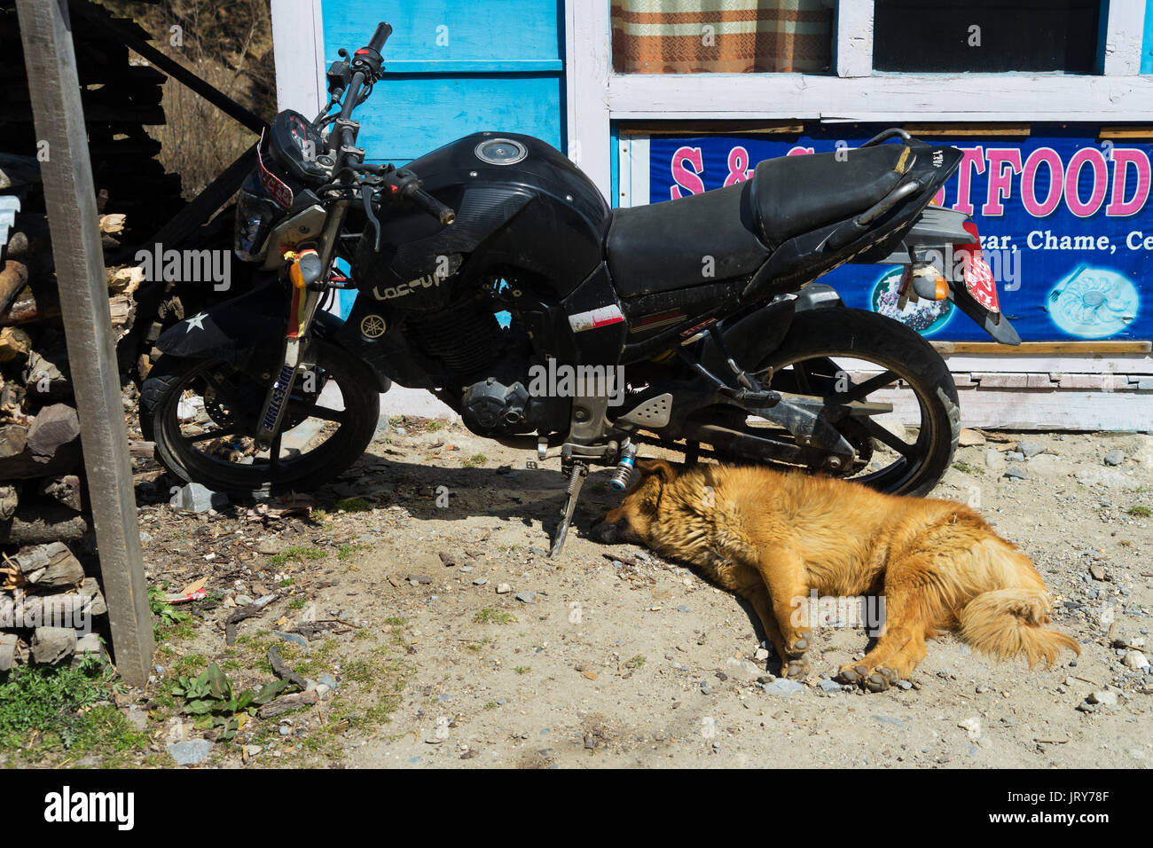 Dog sleeping on the ground beside a motorcycle. - Stock Image