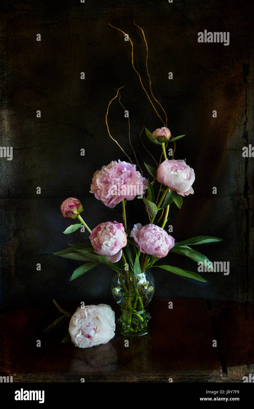 Pink Peonies in a roemer style glass with prunts on an old wood table with textured background - Stock Image