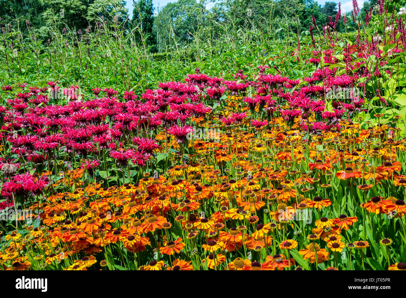 Perennial flowers Pink Monarda and Orange Rudbeckia in a herbaceous border. - Stock Image