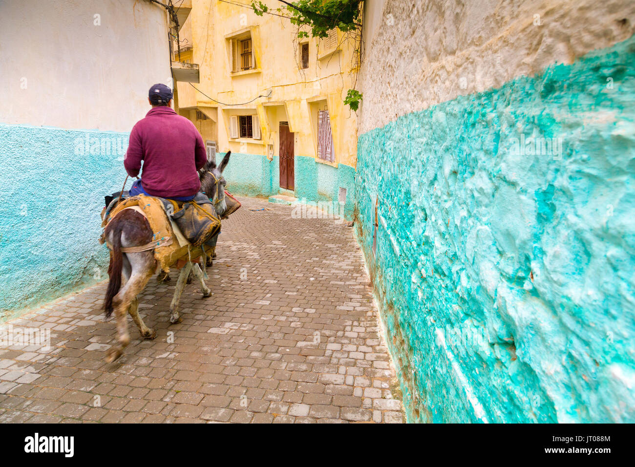 Man riding a donkey, Street life scene, Moulay Idriss. Morocco, Maghreb North Africa - Stock Image