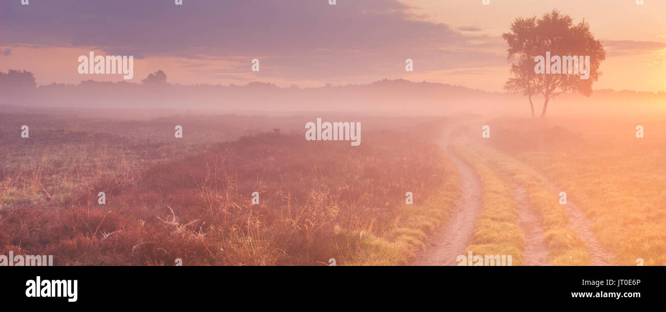 A path through moorland in The Netherlands on a beautiful foggy morning at sunrise. Stock Photo