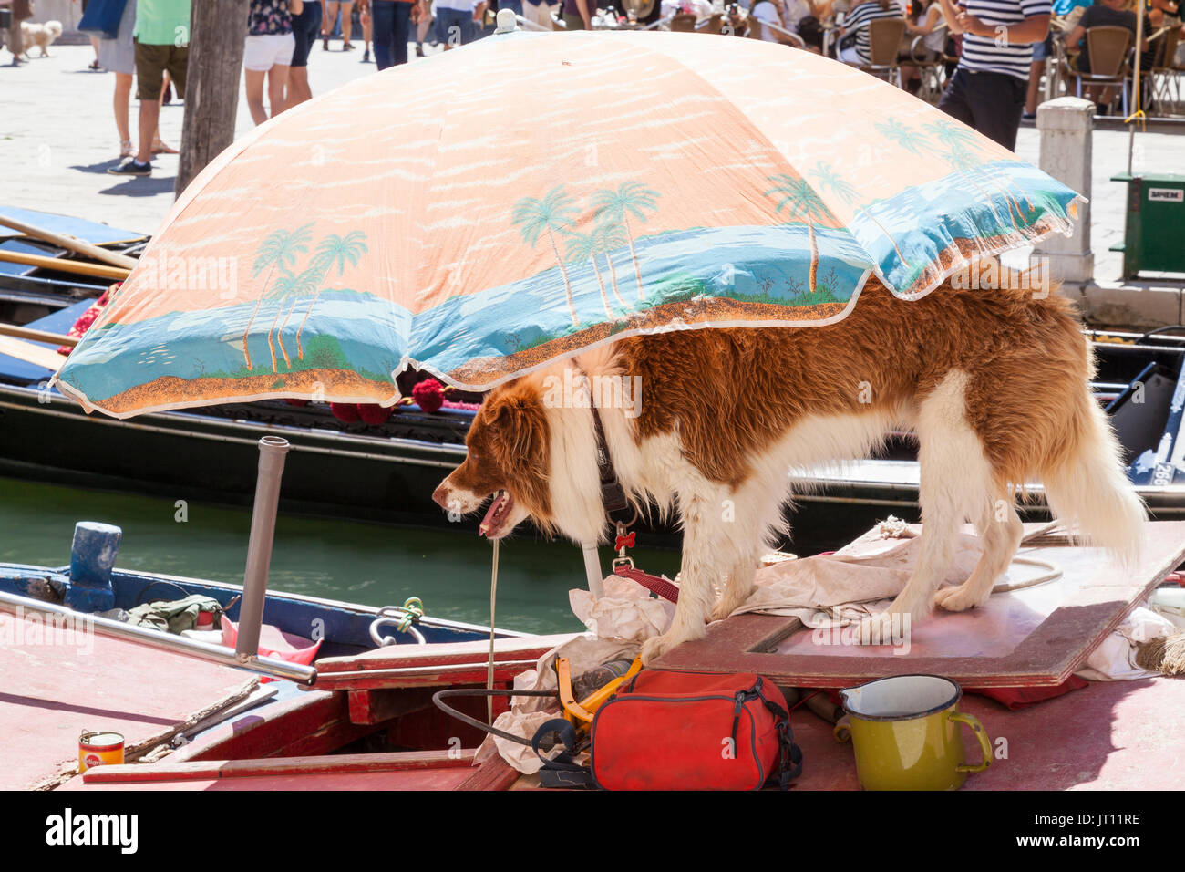 Venice Italy Heatwave. 7 August 2017. Dog sheltering under its own umbrella on a working boat in Venice, Italy during the extreme weather conditions and summer heat of the August 2017 heatwave in the canal alongside Campo San Barnaba, Dorsoduro, with a jug of cool water alongside it. Gondolas and legs of the crowd of tourists in the Campo visible behind as it stands waiting expectantly for the owner to return. - Stock Image