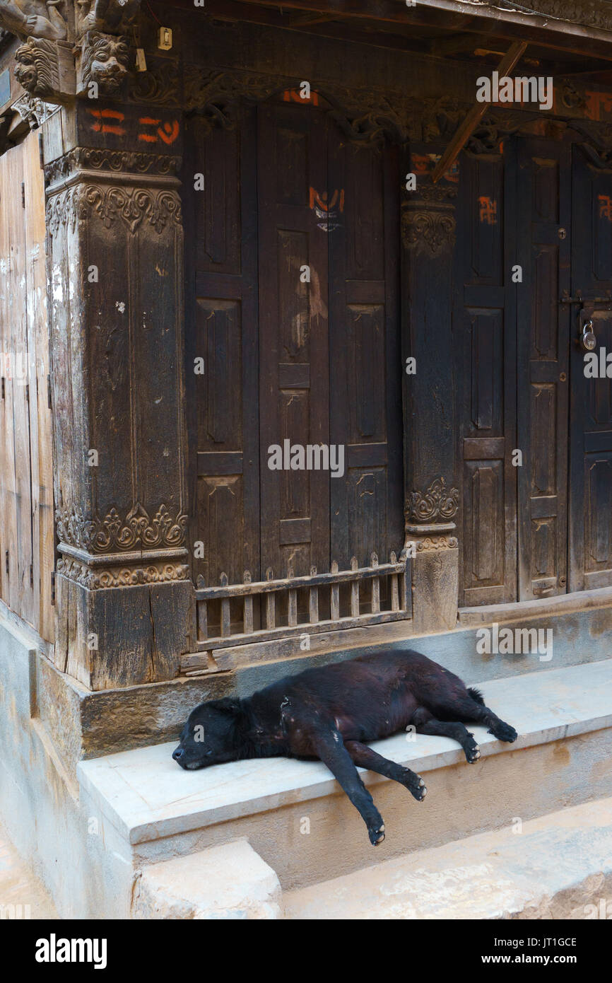 Black dog sleeping on the porch of an ancient house in Bhaktapur, Nepal. - Stock Image
