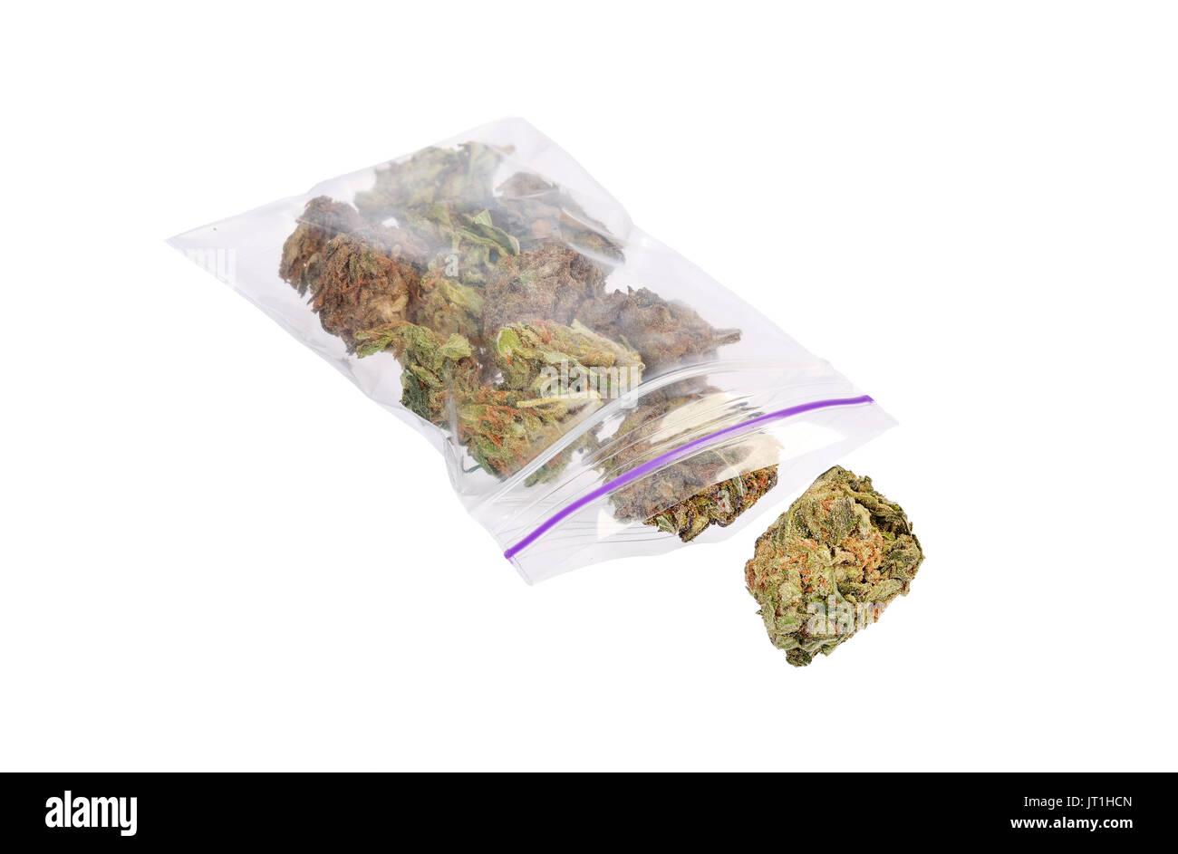 Close up of marijuana plant - Stock Image