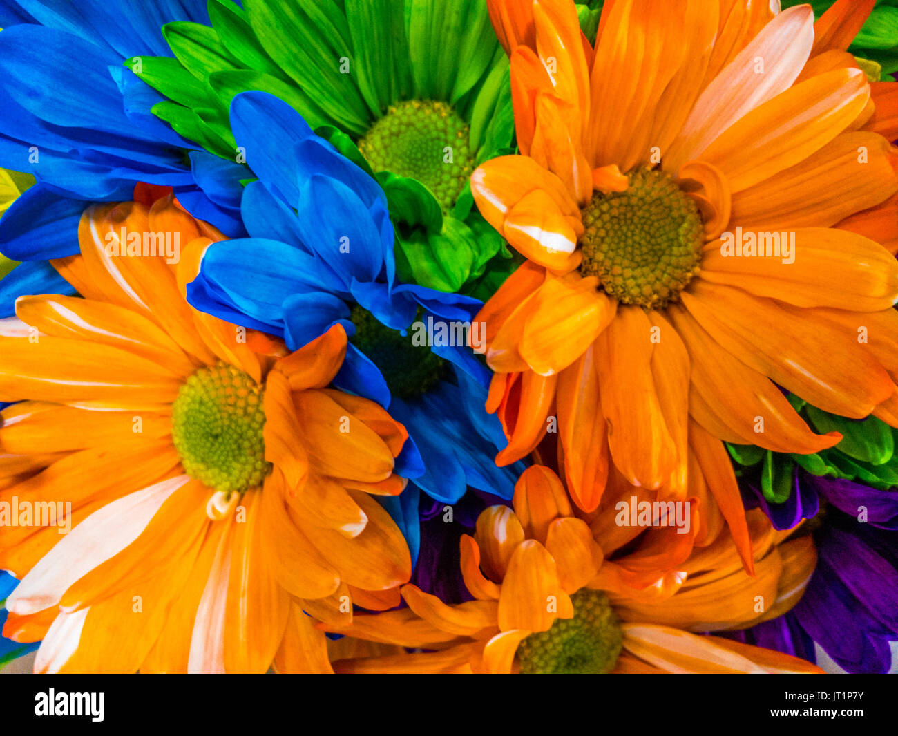 Multi colored flowers pictures
