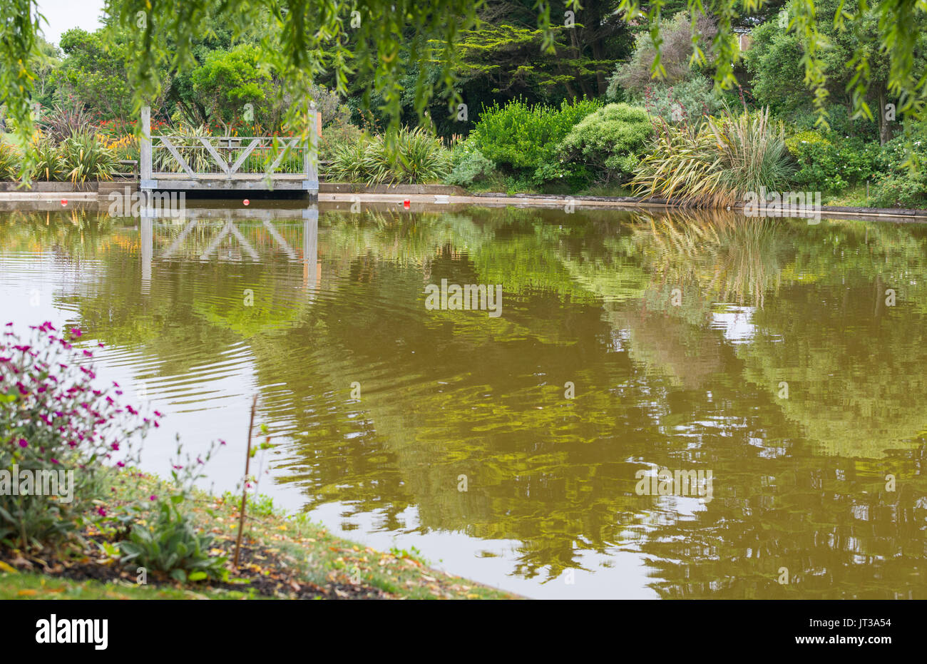 Brown discoloured water in Mewsbrook Park lake in Littlehampton, West Sussex, UK, during hot Summer weather. - Stock Image