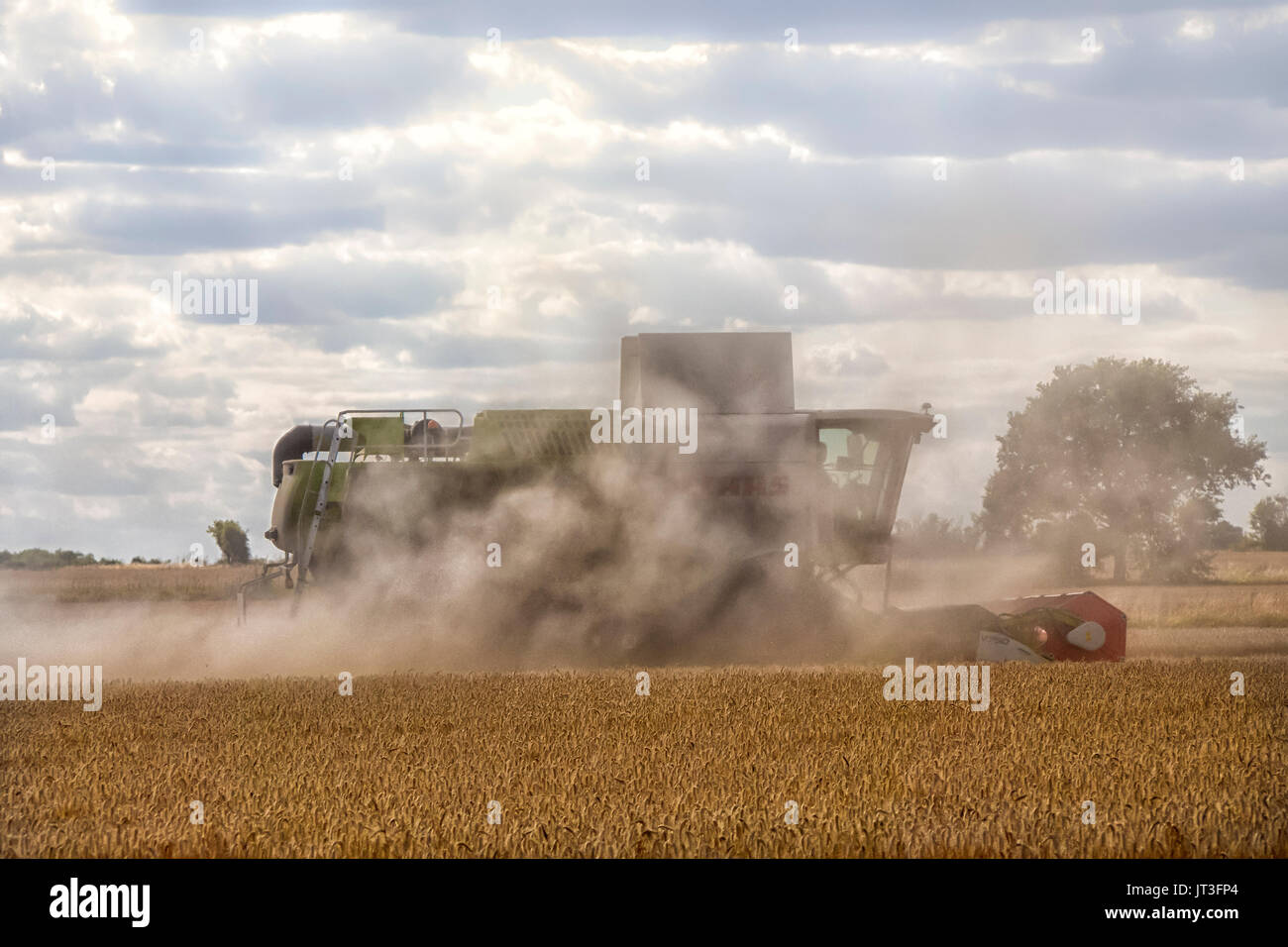 Claas Combine harvesting wheat in rural Essex field working in a cloud of dust - Stock Image