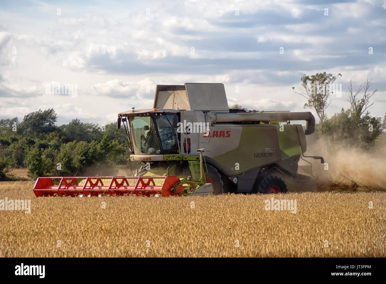 Combine harvesting wheat in rural Essex field - Stock Image