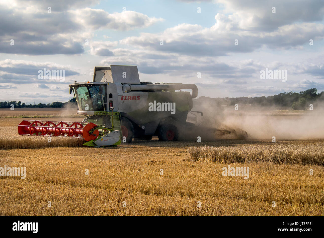 Claas Combine harvesting wheat in rural Essex field working with cloud of dust behind it - Stock Image