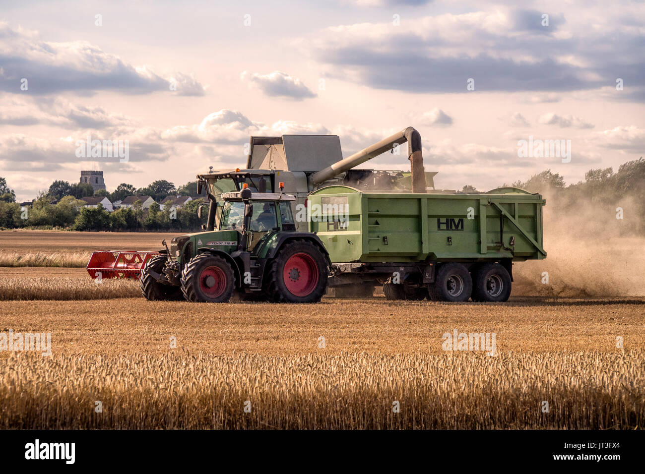 Combine harvester transferring harvested wheat in to tractor trailer in rural Essex field - Stock Image