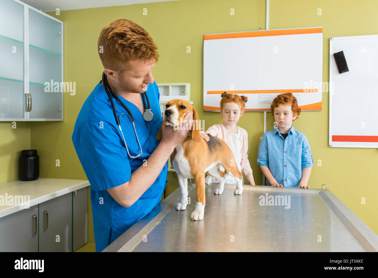 Veterinary examining Beagle dog at clinic, children pet owners standing near - Stock Image
