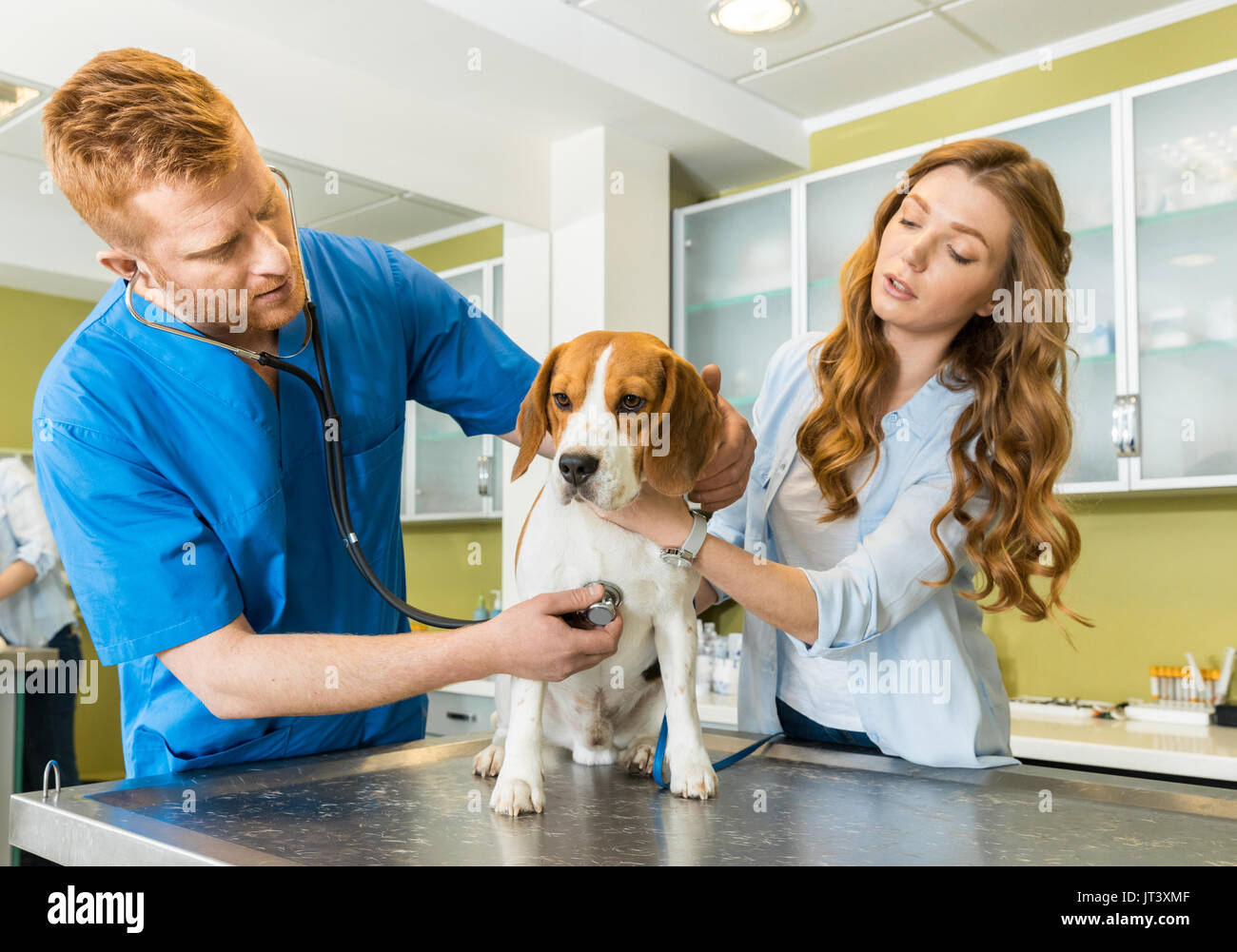 Doctor examining Beagle dog with woman assistant at veterinary clinic - Stock Image