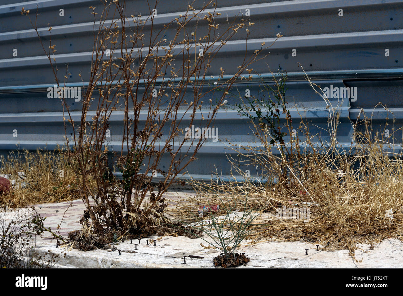Lavrio Port Attica Greece dead plants and weeds - Stock Image