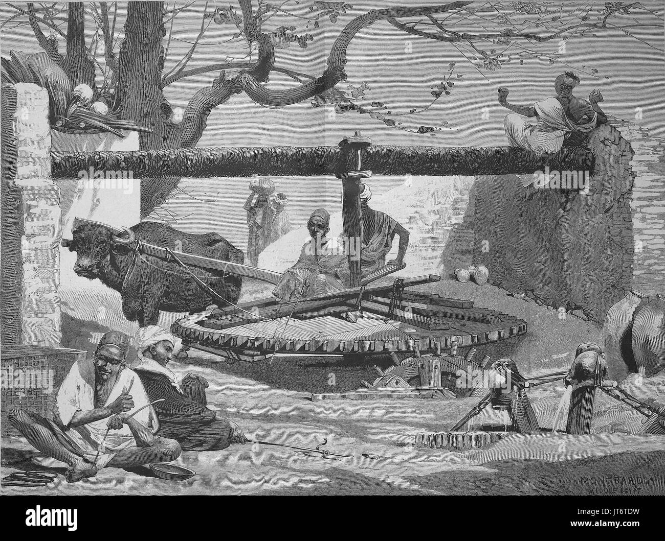 Well in Upper Egypt, the water is drawn with the help of an ox, Digital improved reproduction of an image published between 1880 - 1885 - Stock Image