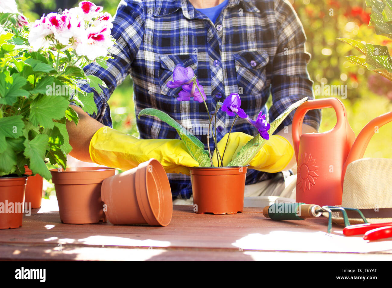 Cherishing my garden. Portrait of gardener's hands in checkered shirt and rubber gloves are planting flowers in the pots on the garden workspace. Flor - Stock Image