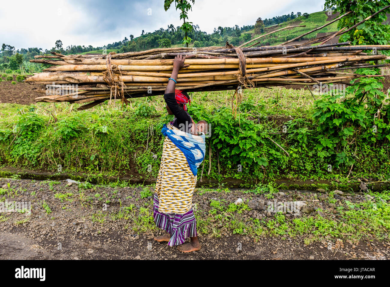 Woman carrying firewood on her head, Virunga National Park, Democratic Republic of the Congo, Africa - Stock Image