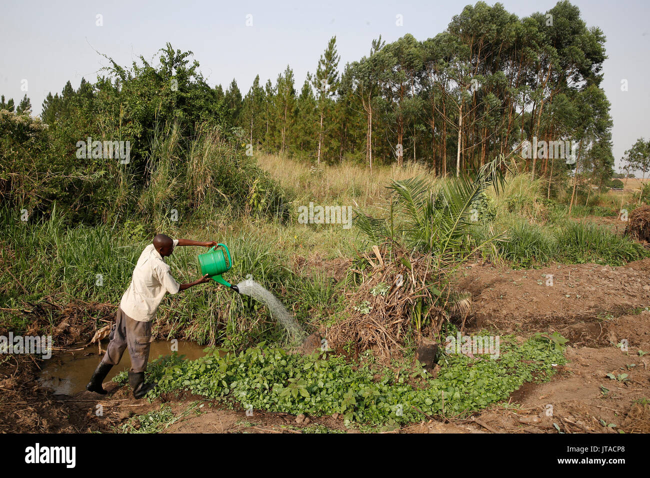 Farmer Apollo Byarunga received two loans from ENCOT microfinance, Uganda, Africa - Stock Image