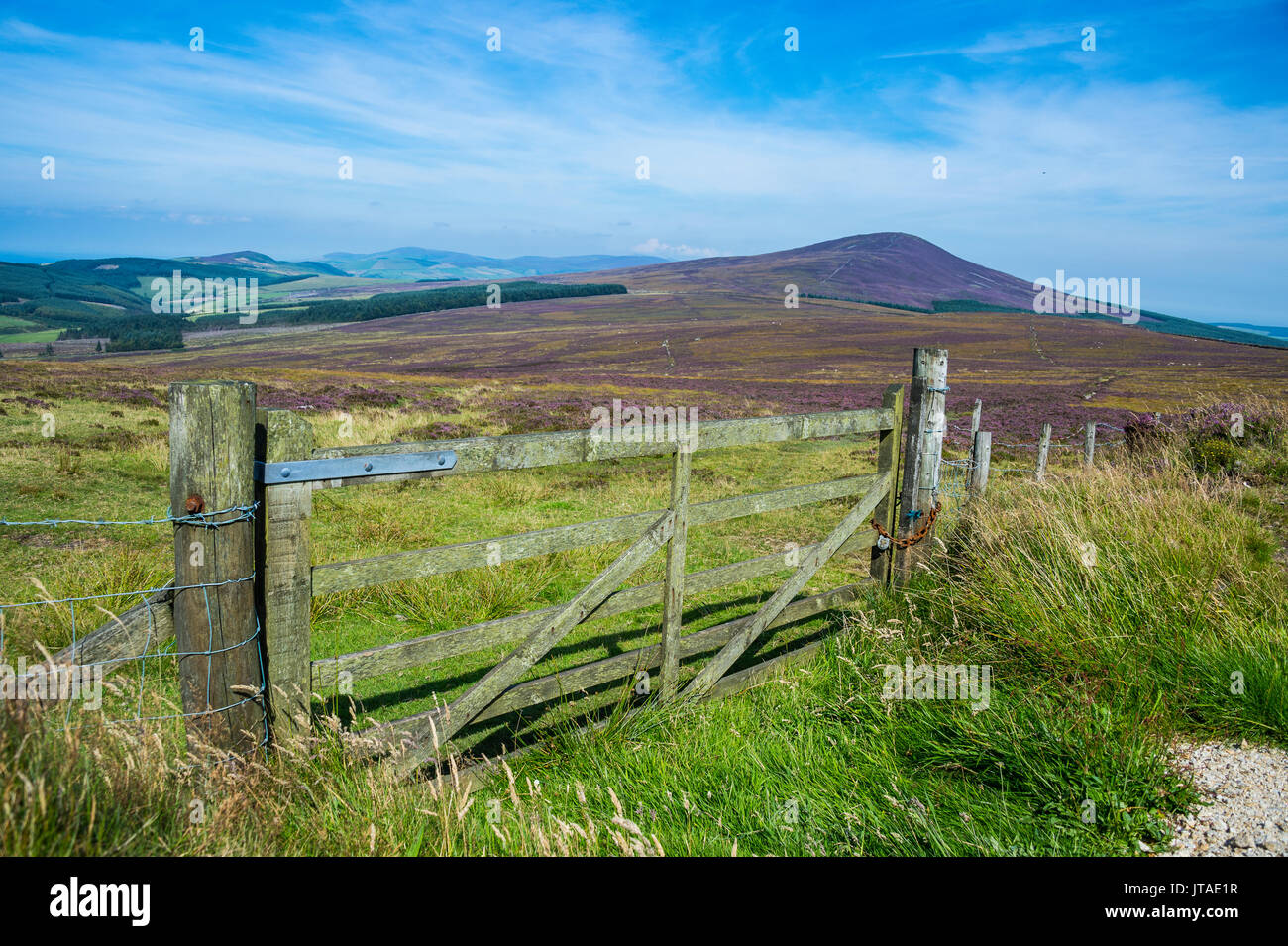 Pasture in the interior of the Isle of Man, crown dependency of the United Kingdom, Europe - Stock Image