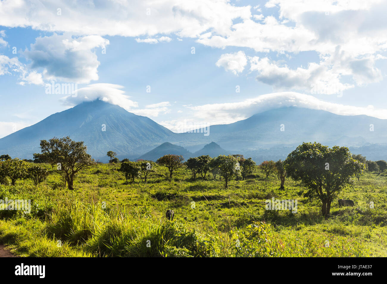 The volcanic mountain chain of the Virunga National Park, UNESCO World Heritage Site, Democratic Republic of the Congo, Africa - Stock Image