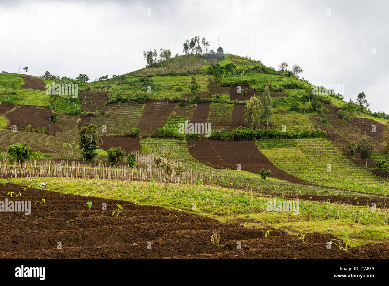 Farmland in the Virunga National Park, Democratic Republic of the Congo, Africa - Stock Image