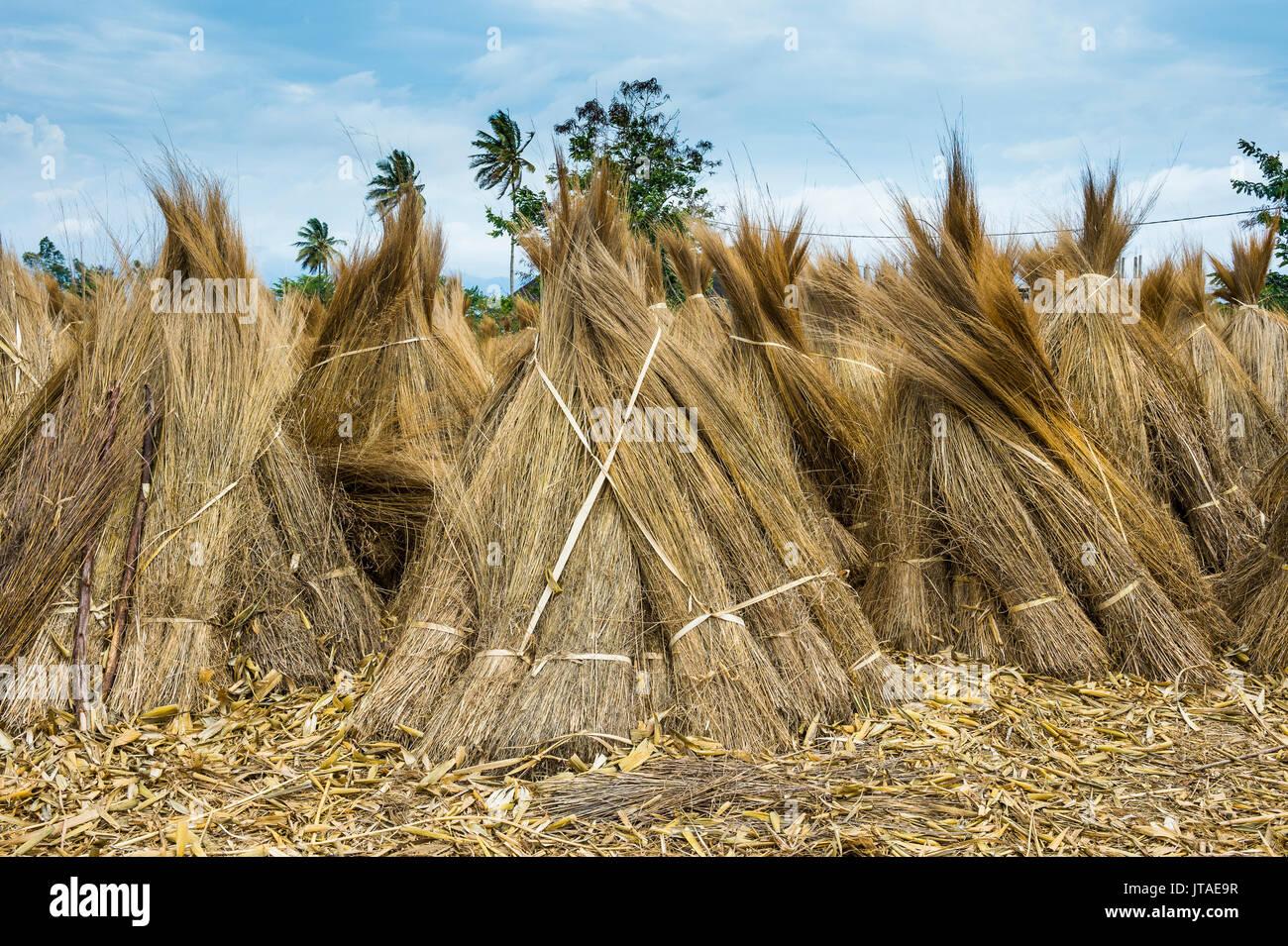 Reeds for sale on the shores of Lake Tanganyika, Bujumbura, Burundi, Africa Stock Photo