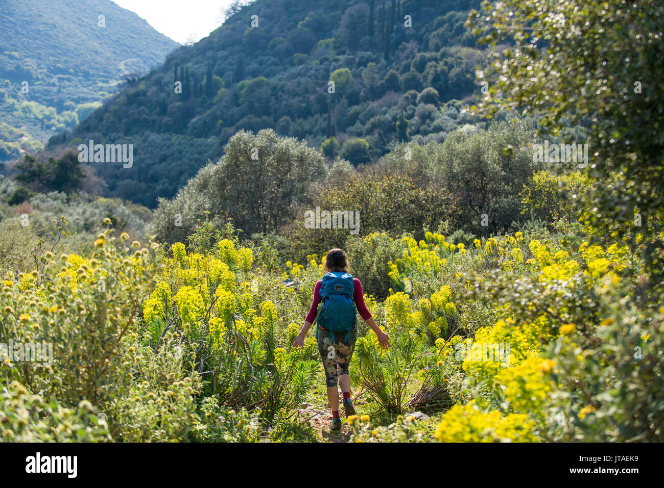 A woman hiking a trail full of abundant wild flowers on the Mani Peninsula in the Peloponnese, Greece, Europe - Stock Image