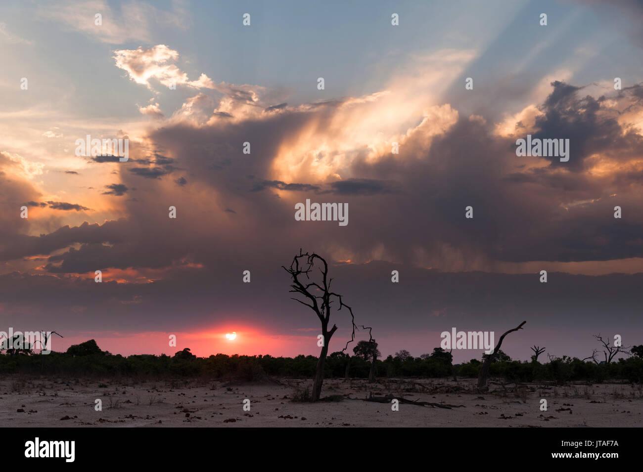 Savuti Marsh at sunset, Botswana, Africa Stock Photo