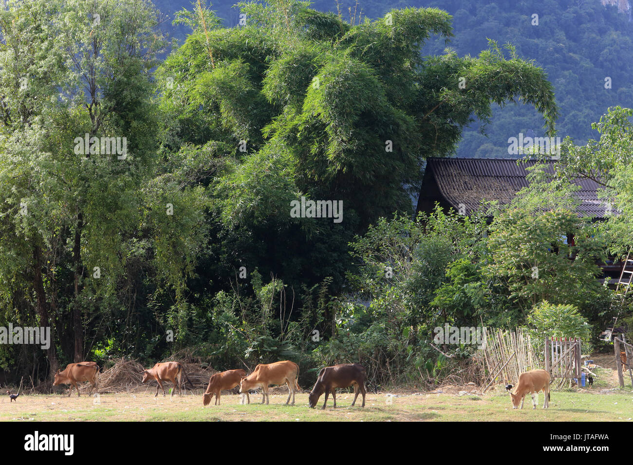 Mountainsides in rural Laos near the town of Vang Vieng, Laos, Indochina, Southeast Asia, Asia - Stock Image